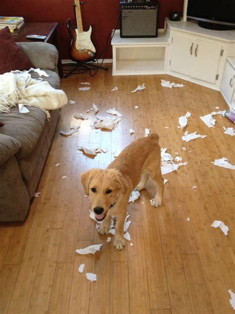 how to dogs to stop chewing on things dogs eat the darndest things tips to stop chewing