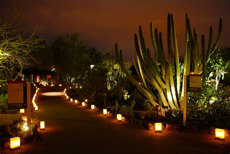 Desert Botanical Garden Luminaries Las Noches De Las Luminarias At Desert Botanical Garden The Roaming Boomers