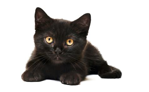 how to find a black cat in a room the psychology of intuition influence decision and trust books black cat images