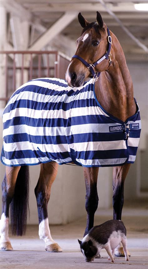 rambo rugs for sale rambo newmarket stable rug
