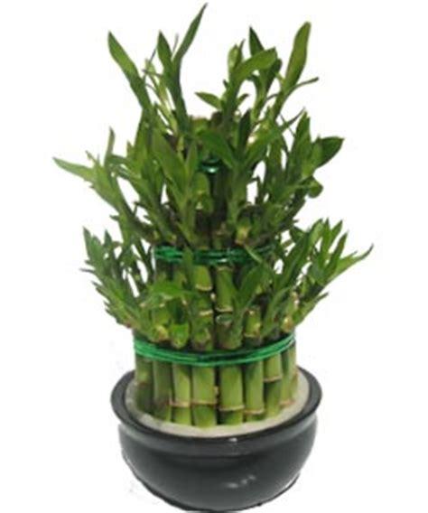 Plante Porte Malheur by Est Ce Un Bambou Ou Sinon Qu Est Ce Lesbambous Fr