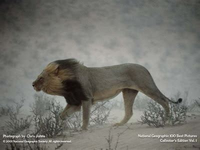 National Geographic Wildlife best wallpapers national geographic best wildlife wallpapers