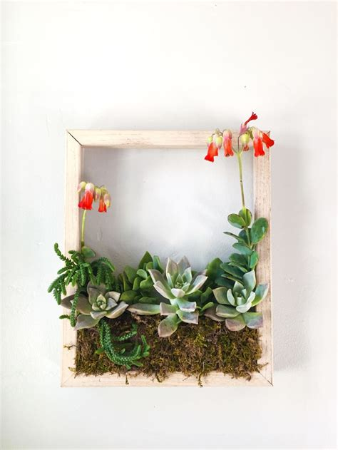 1000 ideas about succulent frame on vertical
