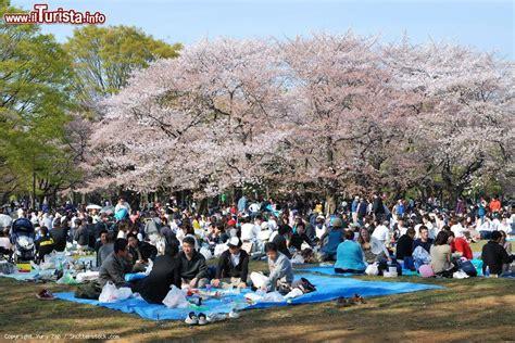 nel giardino dei ciliegi la fioritura dei ciliegi nel parco yoyogi koen foto