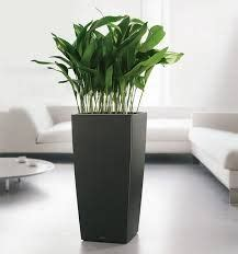 in door plant put in pot vide want list on pinterest hollywood game night scrapbooks