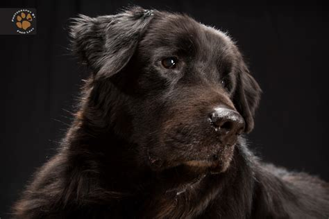 black dogs black dogs are beautiful too a letter to my dog
