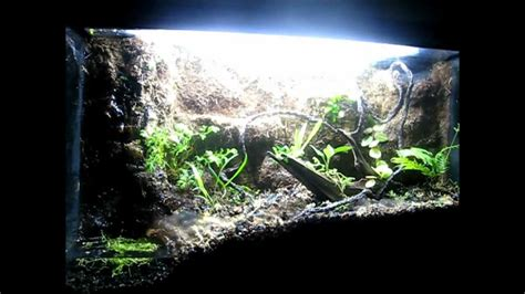 gallon vivarium  water feature youtube
