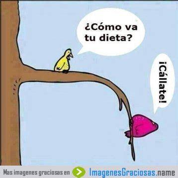 Imagenes Chistosas Haciendo Dieta | imagenes graciosas de dieta imagenes chistosas
