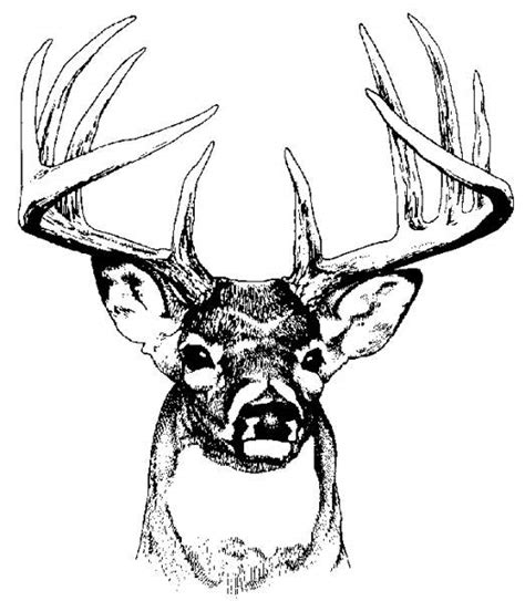 free coloring pages of deer head