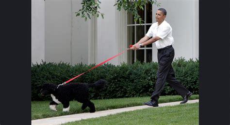 obama bo oh crapp presidential pooches still not whte housebroken