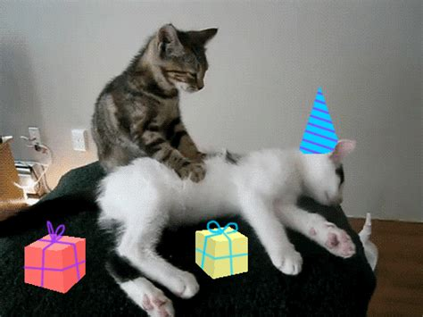 images gif happy birthday celebrate happy birthday gif by birthday bot find