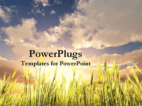Wheat Field Powerpoint Template Software Free Download Mobilfiles Agriculture Powerpoint Templates