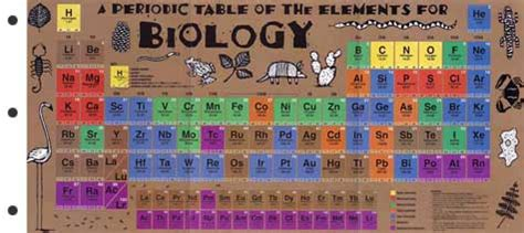printable periodic table for biology biology periodic table