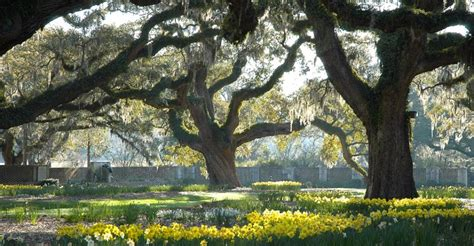 brookgreen gardens things to do pawleysisland
