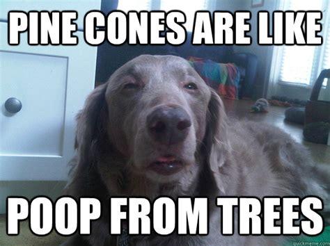 Dog Poop Meme - bloody dog stool memes