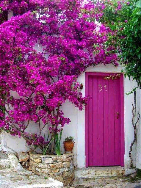 door flower designs 25 best ideas about bougainvillea on bougainvillea colors bougainvillea tree and