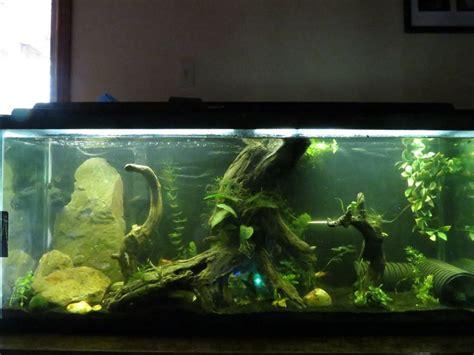 aquarium design in bangladesh cool fish tank 80 gallon 100 gallon fish tank dimensions