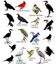 Essay On Different Types Of Birds In bird facts types of birds