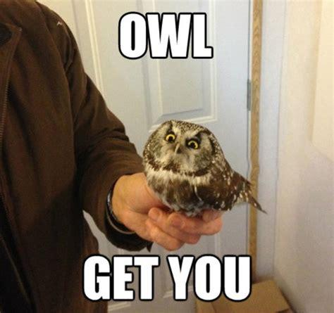 Owl Memes - soon owl cute animals know your meme
