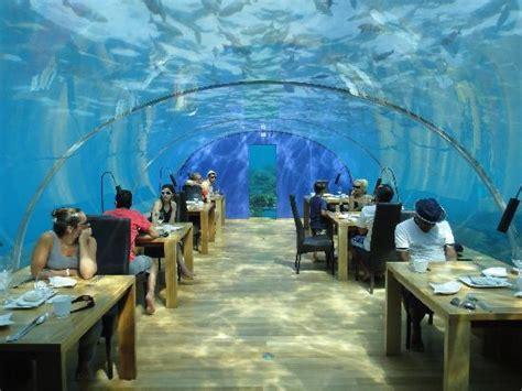 ithaa undersea restaurant ithaa host picture of ithaa undersea restaurant rangali