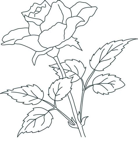 rose petal coloring page rose petals coloring pages coloringstar