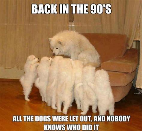 Pet Memes - 10 funny pet memes