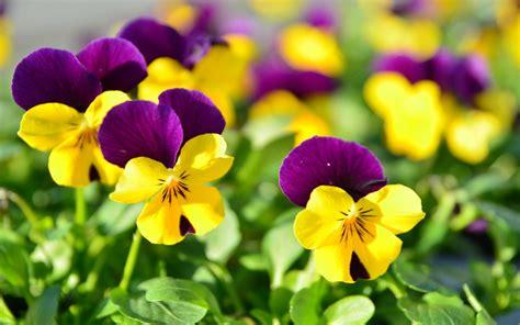 Gardenias by Cuidados De Flores Bonitas Im 225 Genes Y Fotos