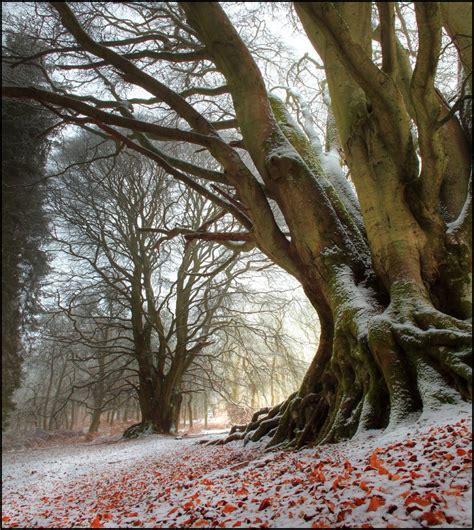 imagenes de arboles invierno first snow 193 rboles pinterest bosques invierno y