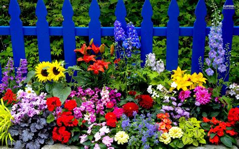 Images Garden Flowers Summer Garden Flower Image Images Photos Pictures
