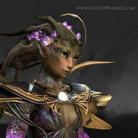 guild wars 2 hairstyles 17 best images about guild wars 2 on pinterest