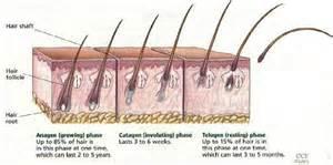 minoxidil hair shedding phase om hair