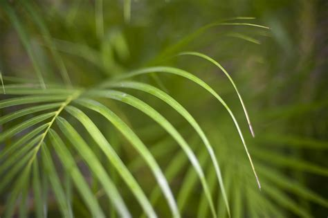 image of lush green tropical fronds freebie photography