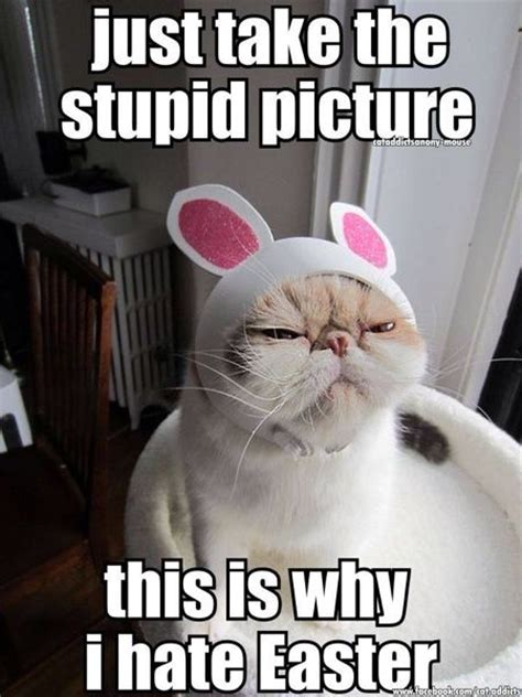 Easter Funny Memes - 1000 images about easter on pinterest cats happy