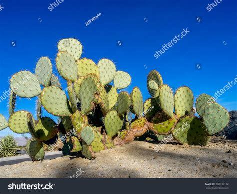 desert botanical garden coupons desert botanical garden coupon national gardens day