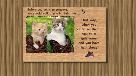 kittens shoes kittens shoes wallpaper animals wallpaper better