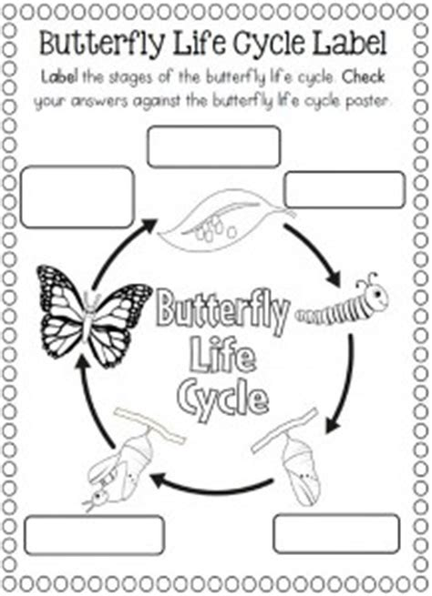 butterfly life cycle coloring sheet homeschool life cycle of a butterfly coloring page school stuff