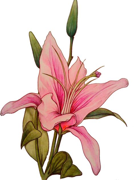 stargazer lily tattoos design stargazer design sketch tattoomagz