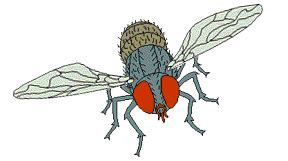 fotos de amor gifs animados dibujos animados de moscas gifs de moscas