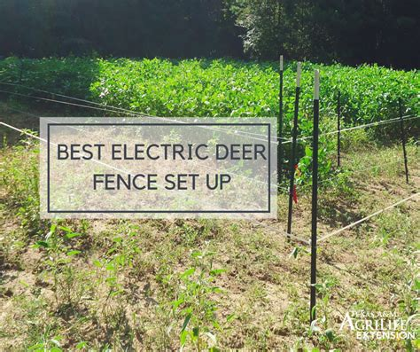 best electric fence electric fence to keep deer out of garden garden ftempo