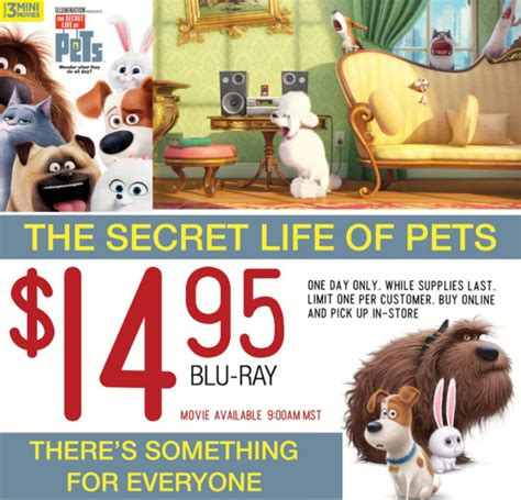 pet stores in ma that sell puppies deal on secret of pets at rc willey mamas on a dime
