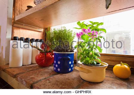 kitchen herb pots herbs on window sill stock photo royalty free image