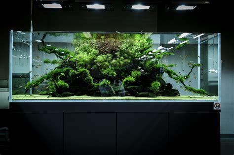 aquarium design standards ada nature aquarium gallery beautiful moments of the