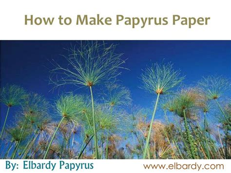 How To Make Paper Out Of Papyrus - ppt how to make papyrus paper powerpoint presentation