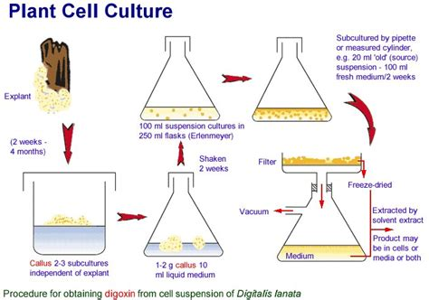plant cell tissue and organ culture cell suspension biotechnology agriculture