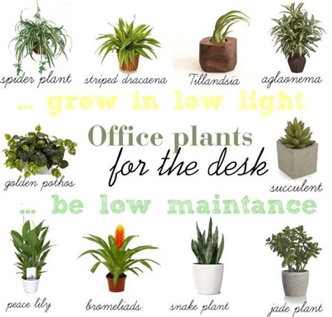 desk plants find a way by jwp low light and low maintance plants for