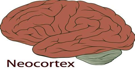neocortex assignment point