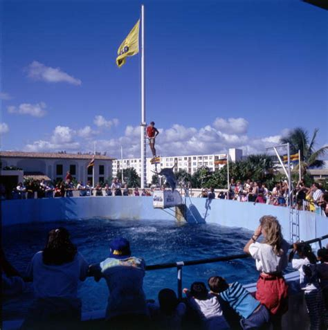 florida memory tourists watching  dolphin show