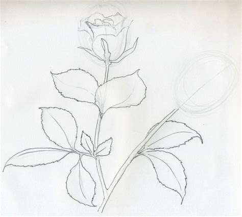 Outline Sketches Of Flowers by Sketch You Will Enjoy