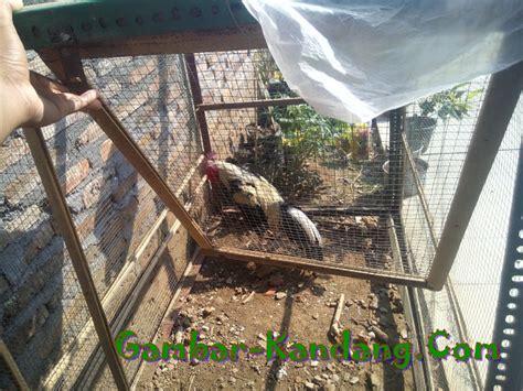 cara membuat kandang jemuran ayam contoh kandang jemur ayam bangkok kumpulan gambar