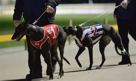 state with most dog owners 2016 uproar as australian state bans greyhound racing daily